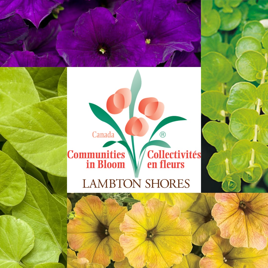 2019 Flower Colours and Selections
